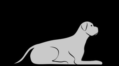 Starszy pies, mało aktywny