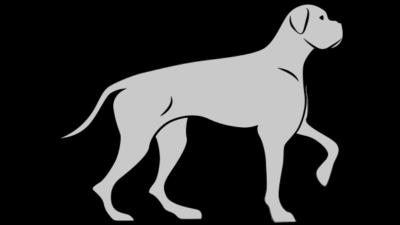 Pies aktywny