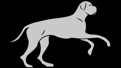 Pies bardzo aktywny