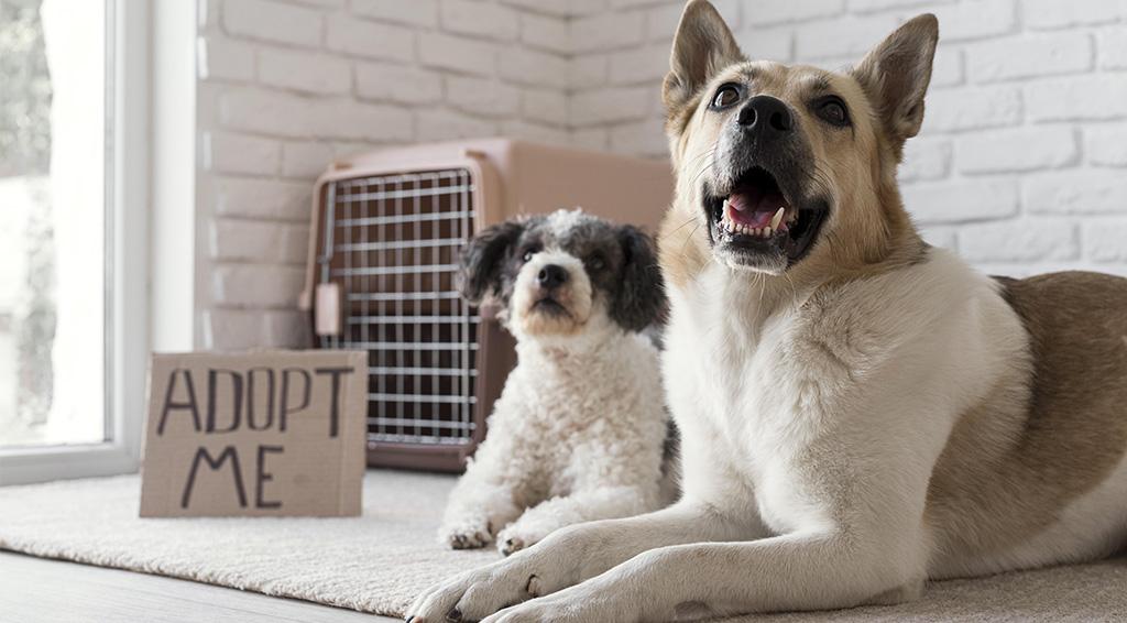 Jak adoptować psa?