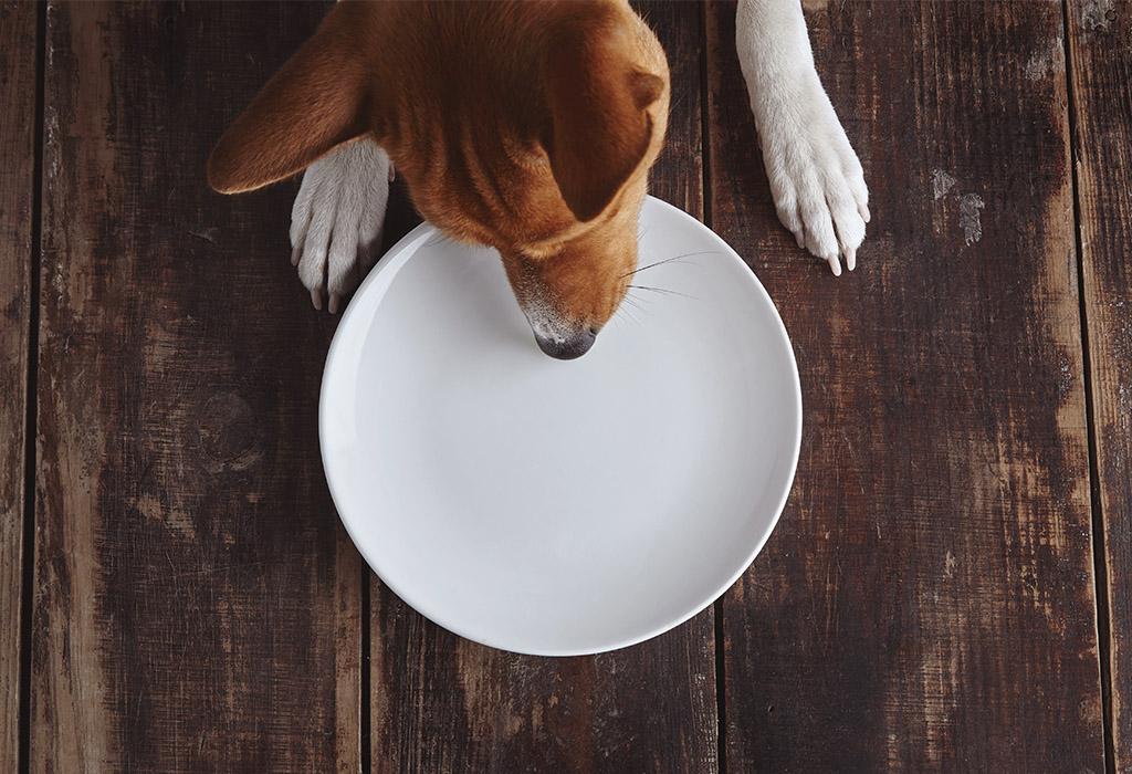 Czekolada w diecie psa