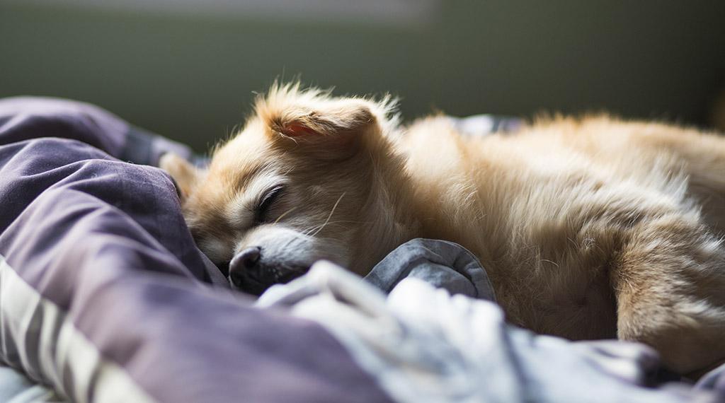 Ile śpią psy